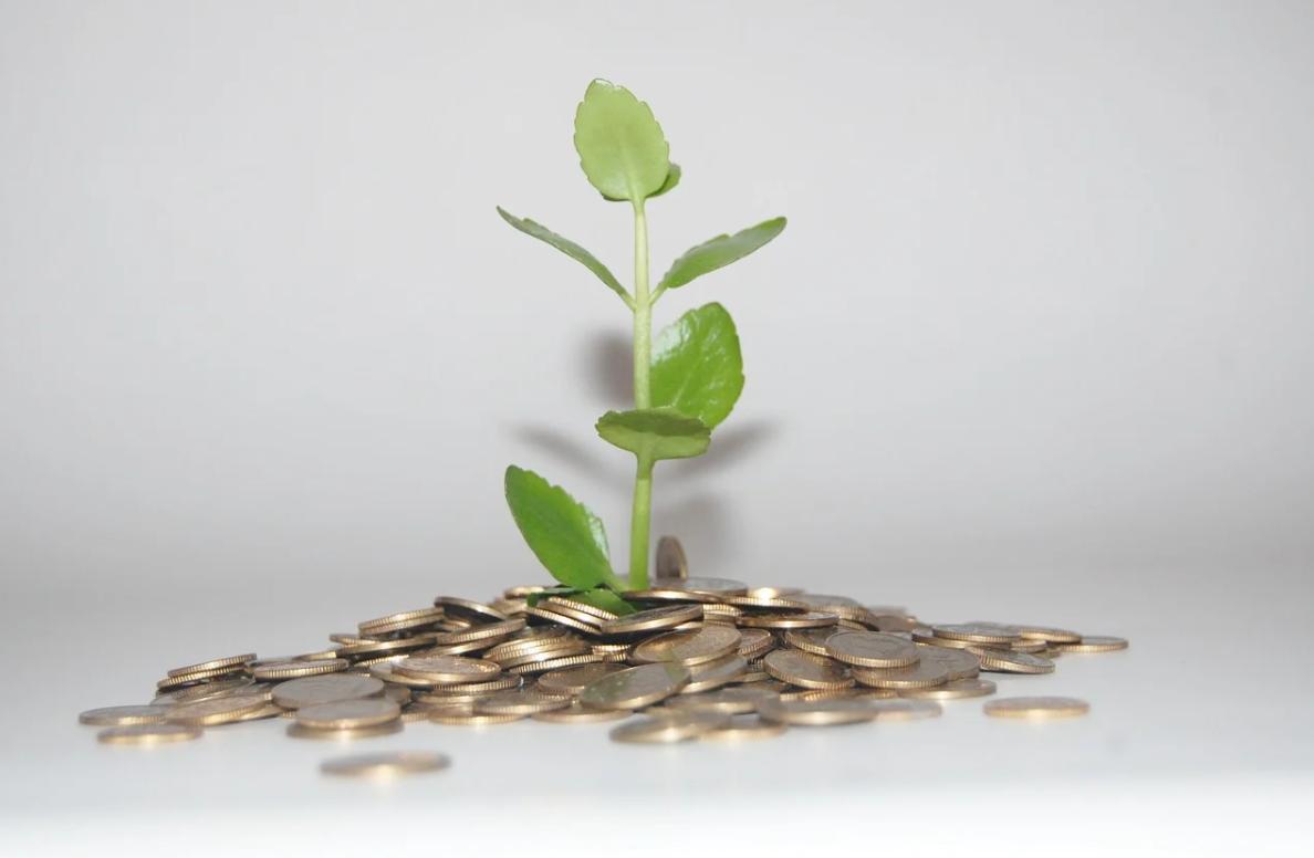 rostlina a peníze